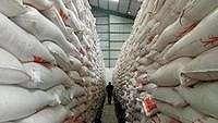 Kapan 500.000 Ton Beras Impor Meluncur ke Pasar?