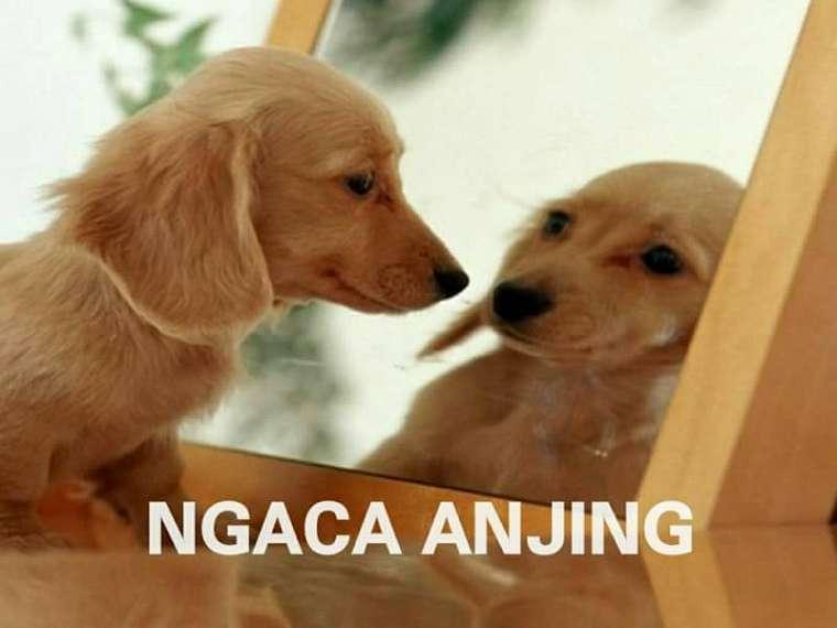 10 Meme 'Aneka Anjing' Ini Lucunya Bikin Pengen Berkata Kasar