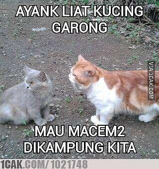 Meme beda nasib kucing kampung Berbagai sumber