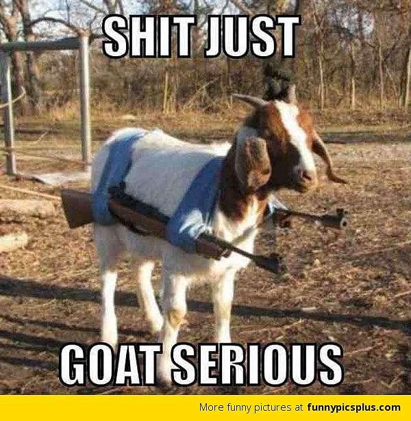 10 Meme lucu cara kambing kabur © 2020