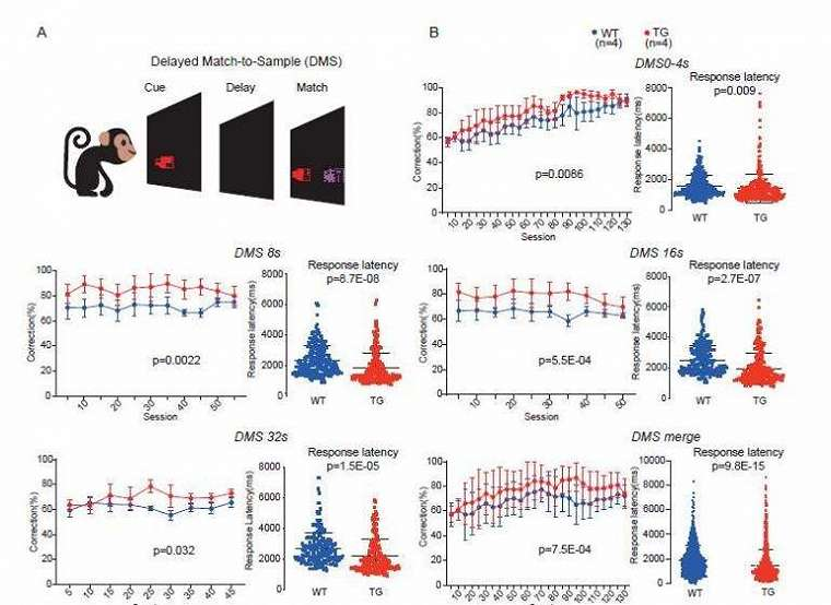 Respon monyet transgenik digambarkan sebagai warna merah sedagkan monyet normal dengan warna biru. (National Science Review)