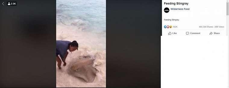 Orang yang memberi makan deretan ikan pari di pantai ini bikin netizen heboh. (Facebook/ Wilderness Food)