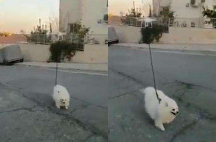 Drone tuntun anjing berjalan-jalan. (Facebook)