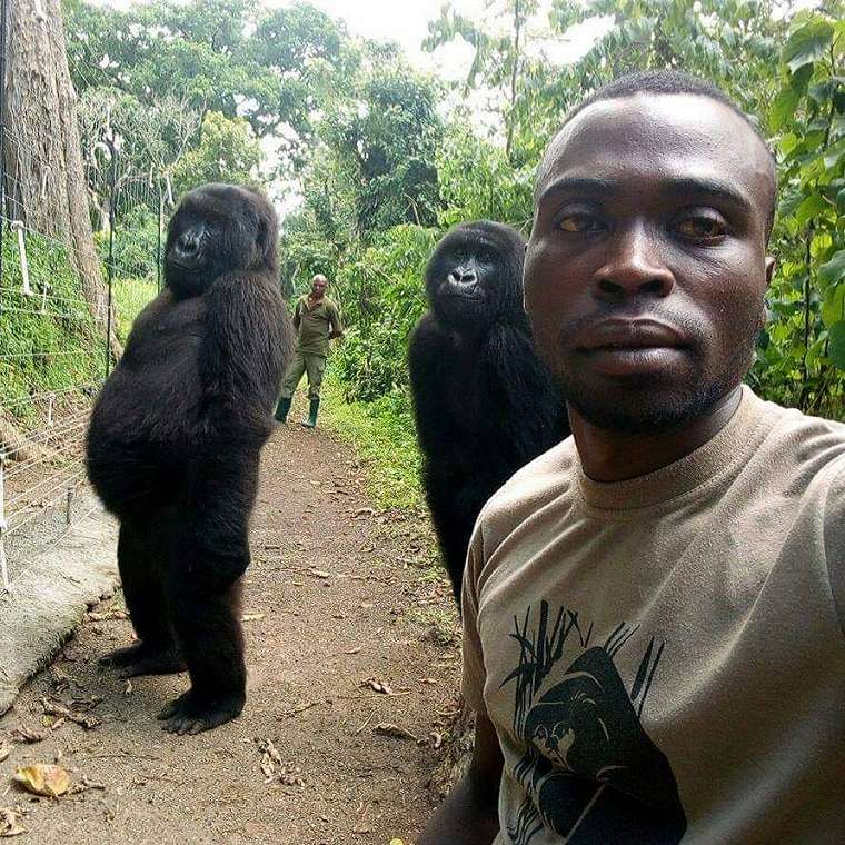 This selfie received thousands of likes with many thanking the rangers for protecting the animals