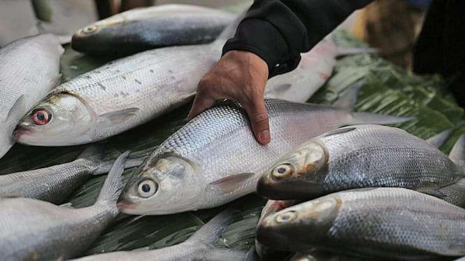 Penjualan Ikan Bandeng Imlek
