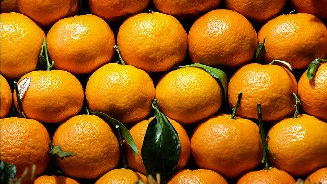 Ilustrasi buah jeruk