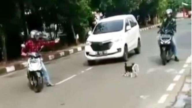Seekor Kucing yang menyebrang di jalan raya