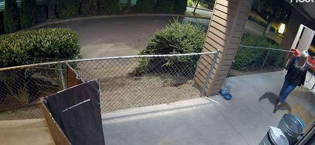 Kamera Keamanan Merekam Seorang Wanita Berulang Kali Mencuri Makanan yang Disumbangkan untuk Anak-anak Anjing