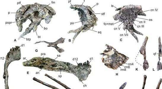 Ilmuwan Menemukan Spesies Baru, Dinosaurus Berduri Banyak