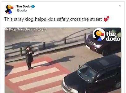 Bantu Anak-Anak Menyeberang Jalan Setiap Hari, Anjing Ini Bikin Kagum