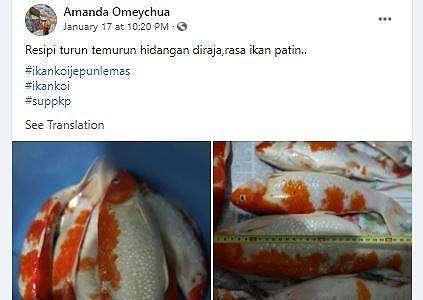 Viral Wanita Masak Sup Ikan Koi, Netizen Penasaran Rasanya