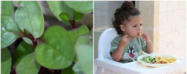 8 Manfaat daun binahong untuk kesehatan yang jarang diketahui