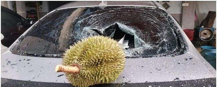 Viral durian jatuh tak sentuh tanah, dijual Rp 1,7 juta
