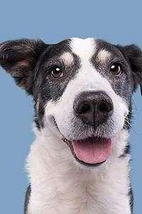 Viral, Wanita Mengaku Kulitnya Bebas Jerawat Berkat Minum Urin Anjing